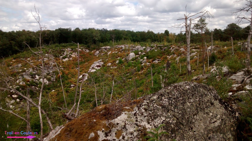 Les 25 bosses de Fontainebleau, entre escalade et trail