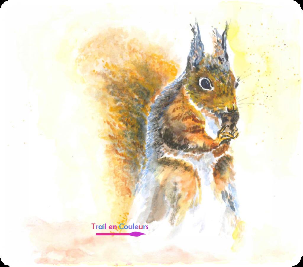 Le ravito de l'écureuil